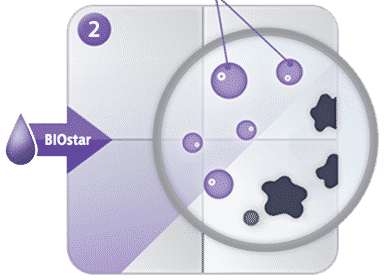 Probiotyki BIOstar
